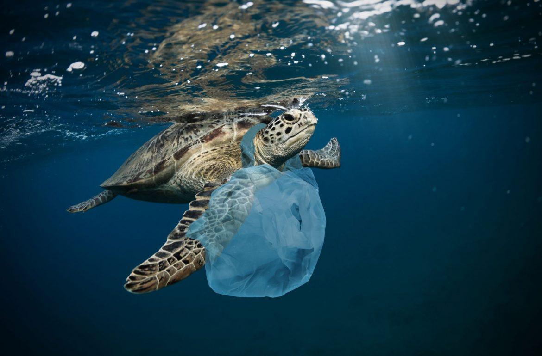 Havet er fullt av plast.